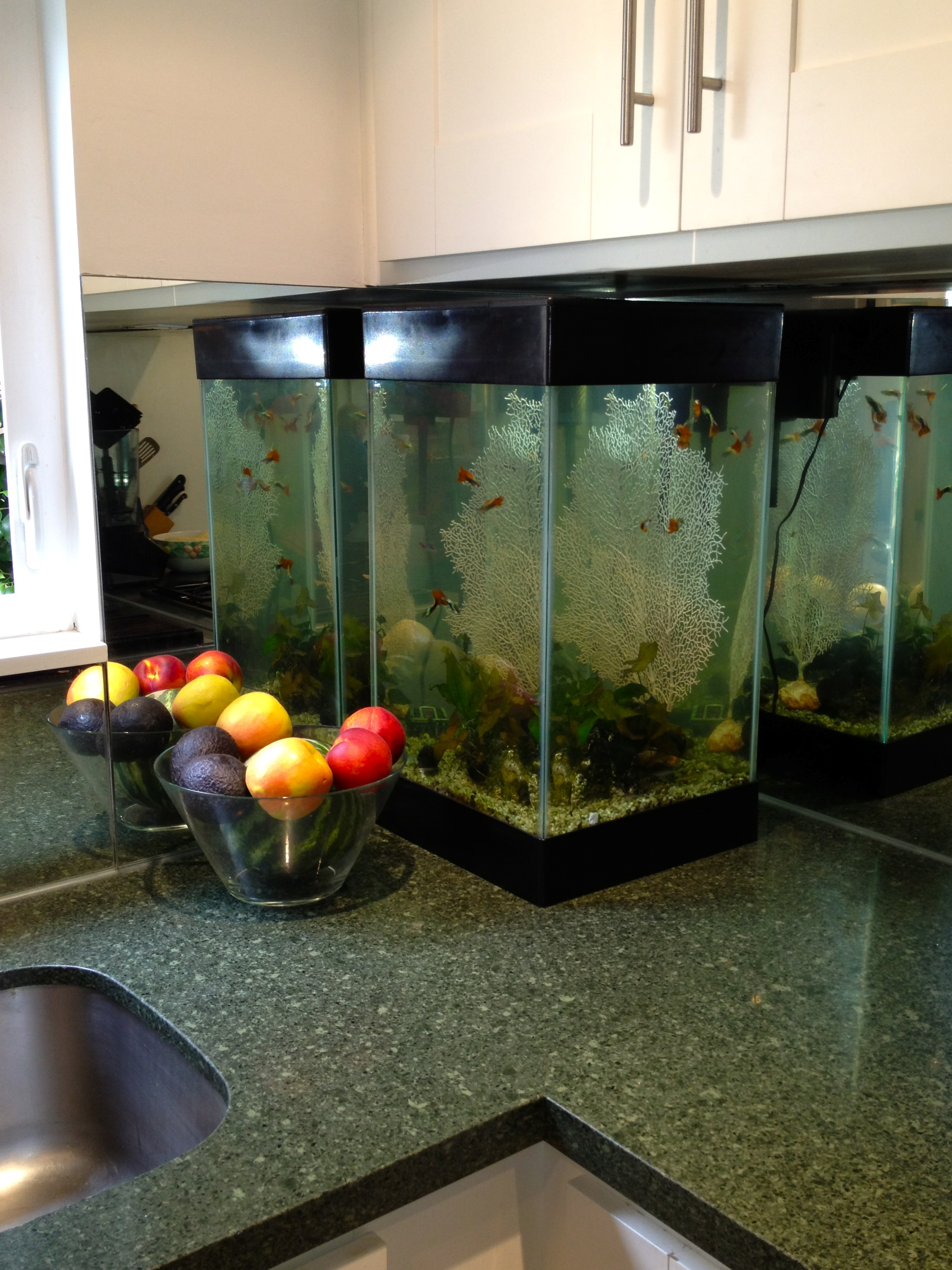Fish tank in kitchen -  Kitchen Fish