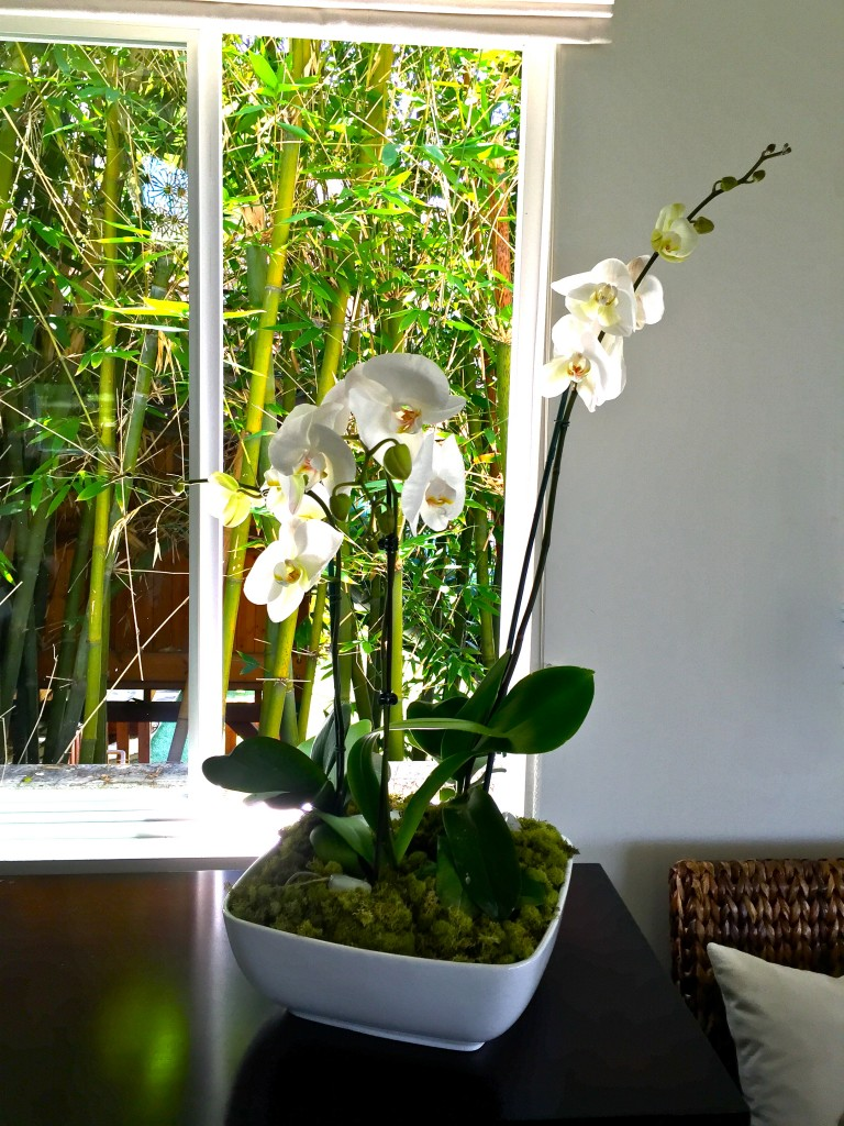 Diy Indoor Orchid Garden Trace Style Create Live