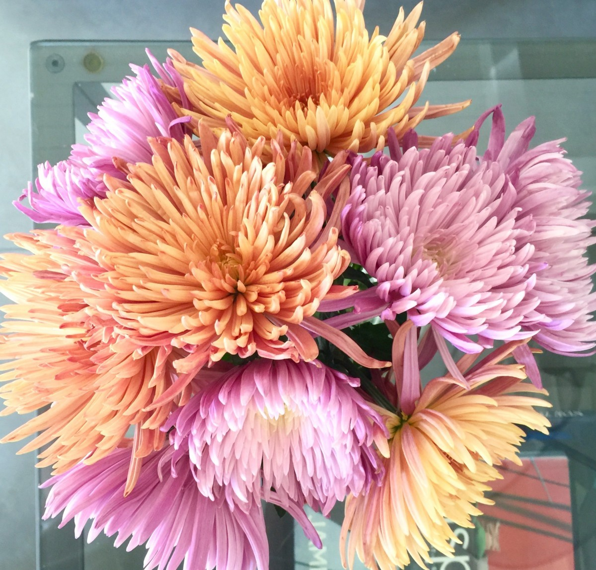 Fall flowers at my place trace style create live chrysanthemums are an inexpensive flower to use when bringing fall colors into the house ive combined pink spider mightylinksfo