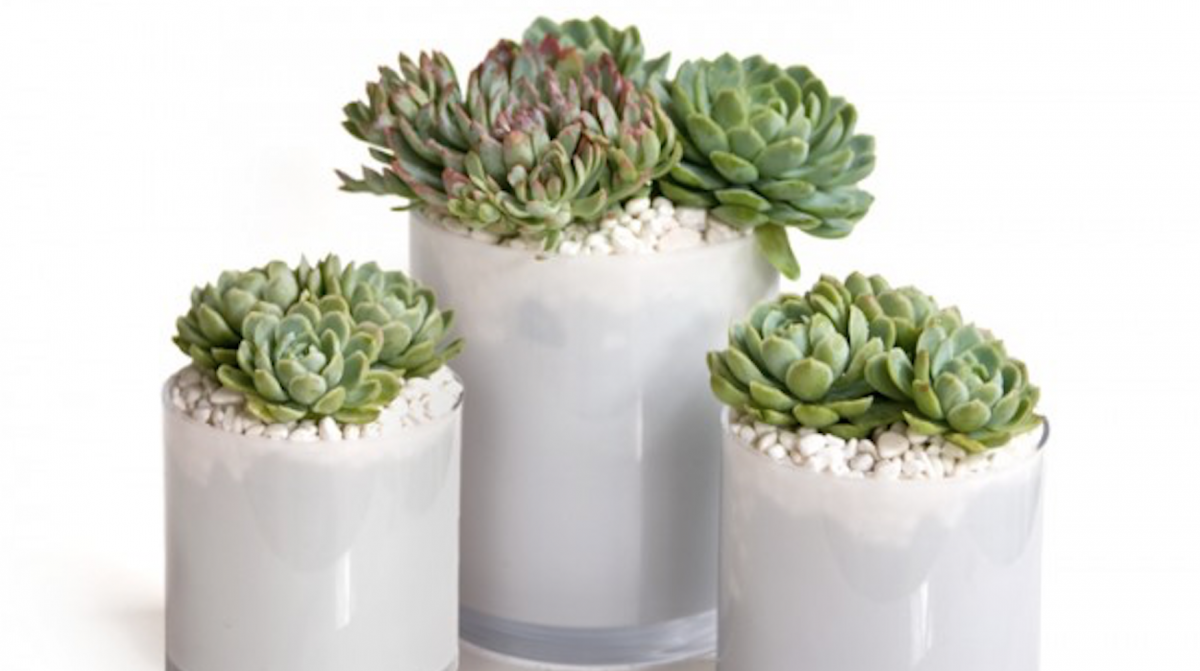 Stunning Succulent Centerpieces Trace Style Create